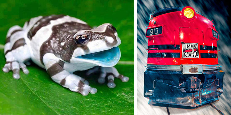 Bright colors aren't evenly distributed in nature. The cyan interior of the frog's mouth is unusual. Objects as red as the train are much more common.